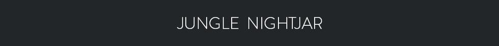 JUNGLE NIGHTJAR  - Caprimulgus indicus