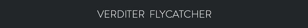 VERDITER FLYCATCHER  - Eumyias thalassinus