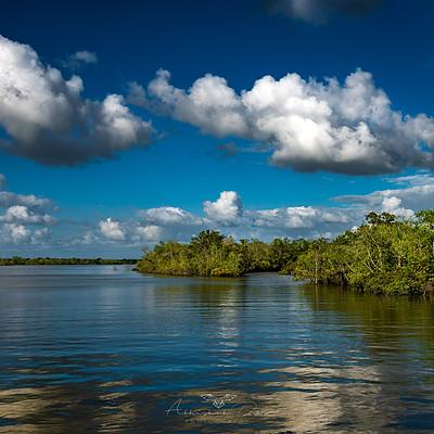 The Mysterious Mangroves Sunderbans