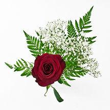 Princess- Single rose.jpg