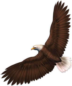 eagle_PNG1202.png