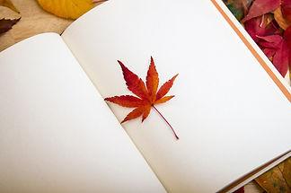 maple-leaf-638022_1920.jpg