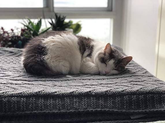 Cat Sitting Mississauga _ Pet Sitting Mi
