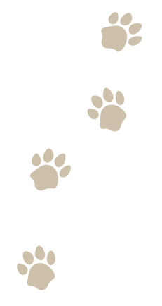 City n Tails | Dog Walker Mississauga | Oakville Pet Sitter