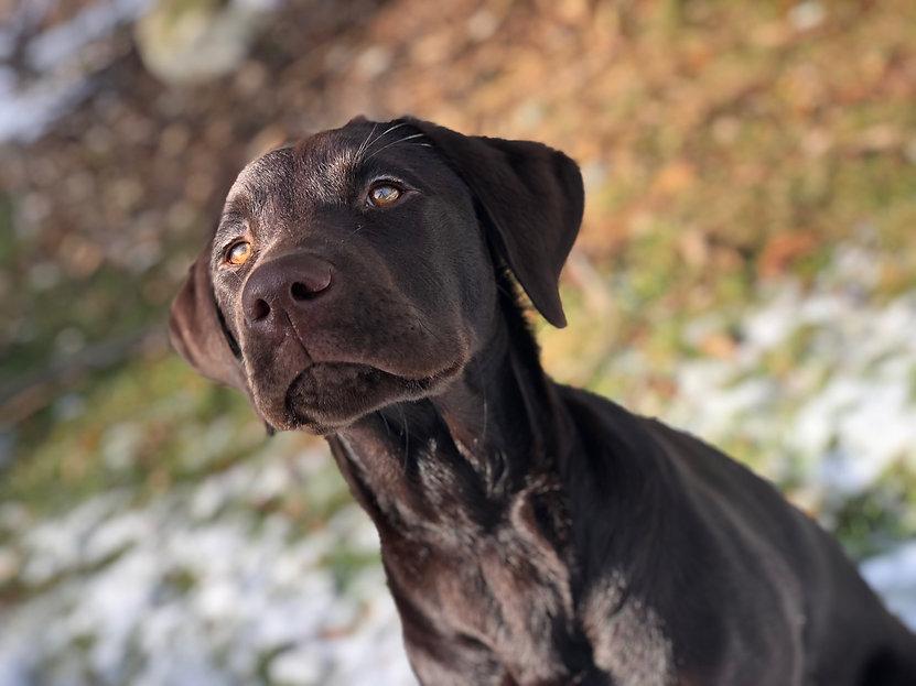 Oakville Dog _ Dog Walker Mississauga _