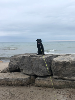 My top 3 best dog walking parks in Mississauga
