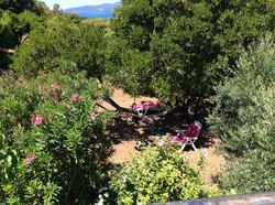 jardin 18d