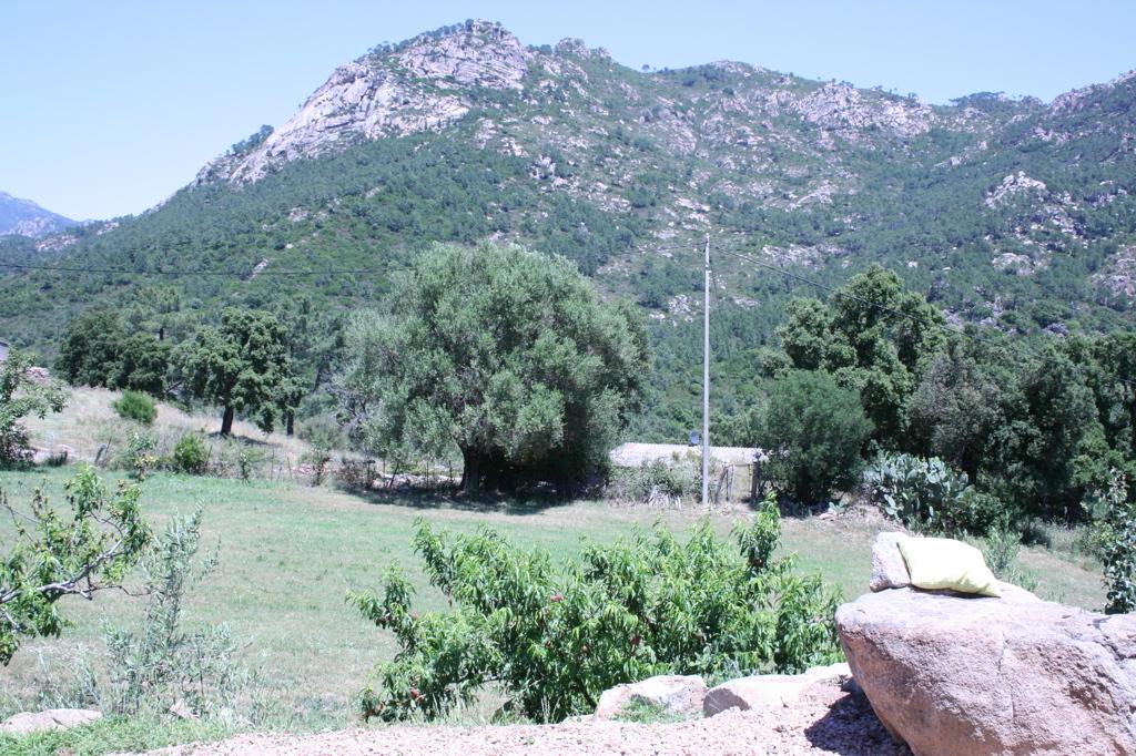 Ferienhaus Korsika mieten, mit Pool,