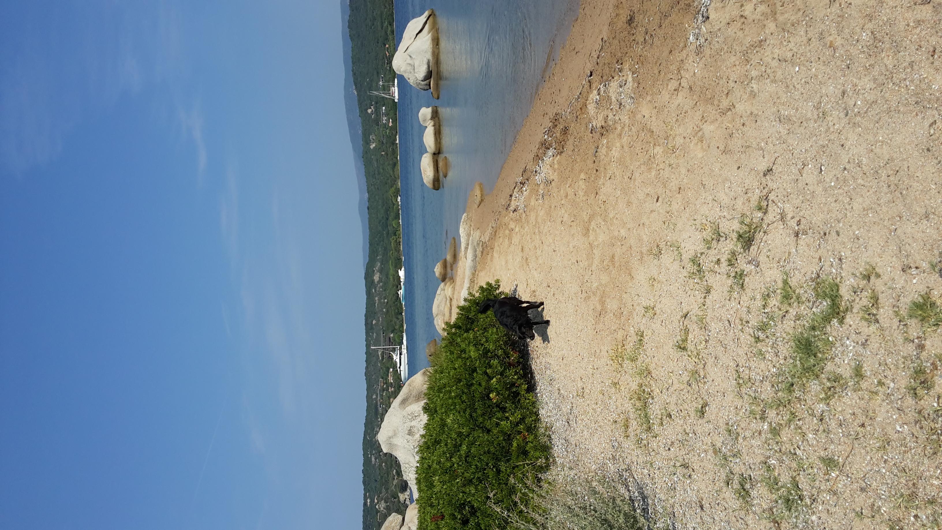 Korsika Ferien mit Hund, strandnah
