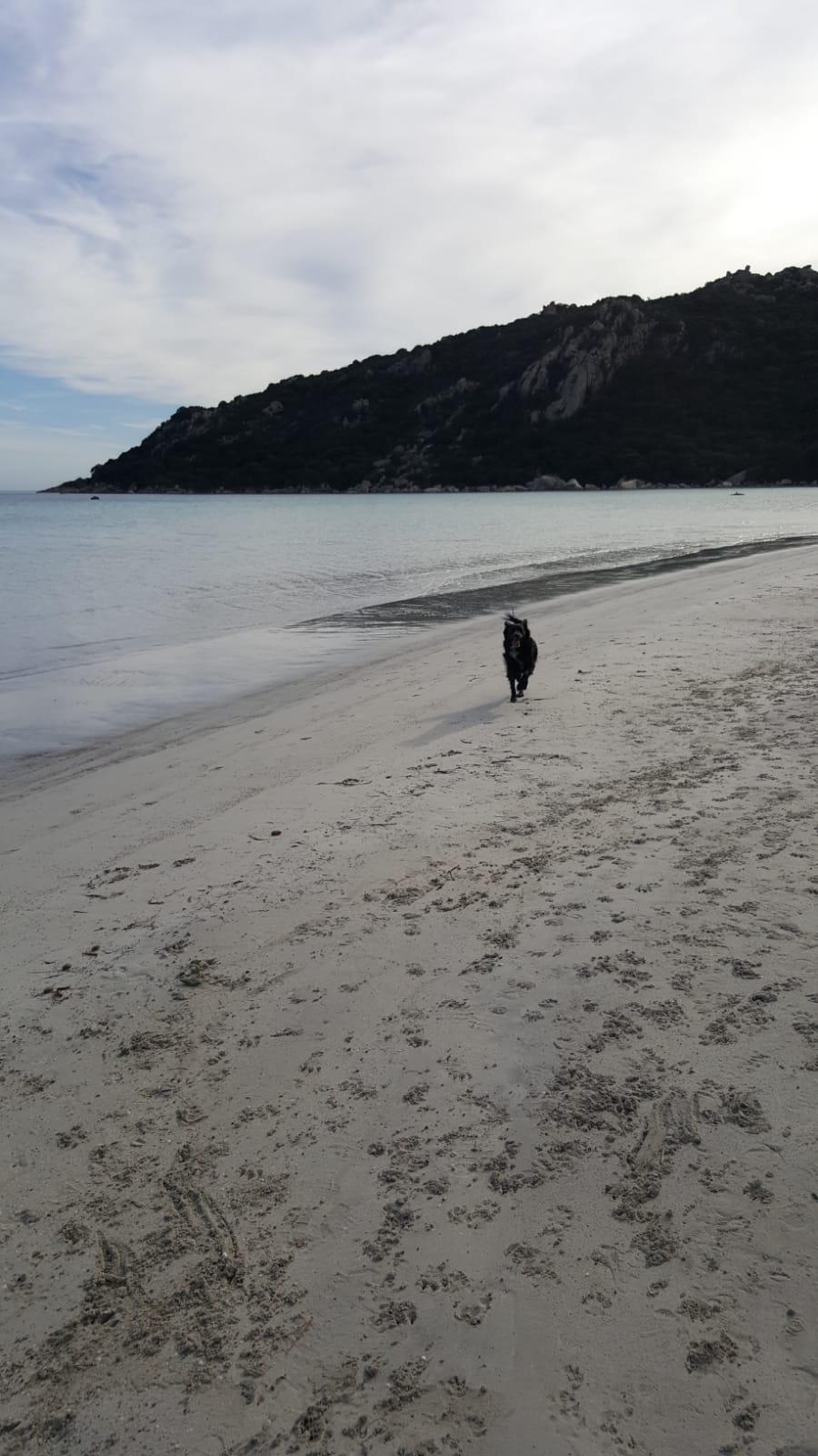 Korsika Ferien mit Hund