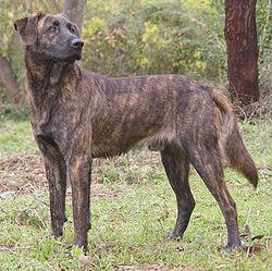 Corse Locations chien Cursinu
