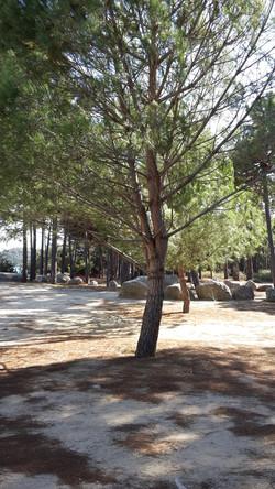 Korsika ; Ferienhaus mit Hund