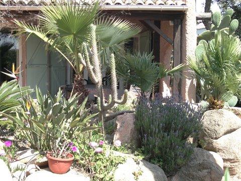 Korsika Ferienhaus, Hund