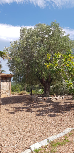 charmantes Ferienhaus süd Korsika