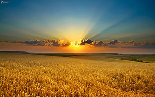 SunsetField.jpg