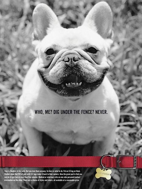 Smiling dog poster for Vetsribe. Steve Swartz, Art Director, Copywirter. Tim Halpin, Creative Director