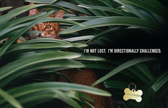VETSCRIBE__DECAL__Lost (v1.5) v2019_01_0