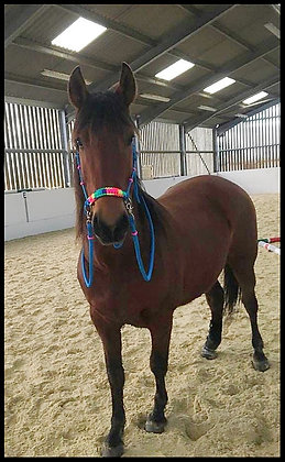 Rope Reins and Braid Side Pull Rope Halter