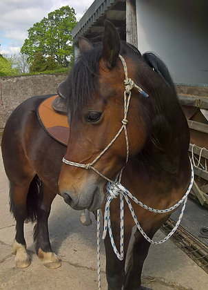 Mecate Reins and Halter