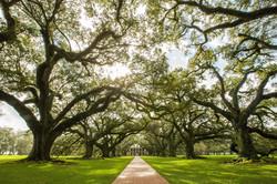 Oak Alley Louisiana