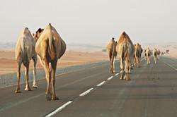 Hatta Desert