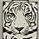 Thumbnail: Eye of the Tiger