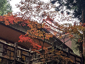 高山楓紅賞景趣Enjoy the colors of fall in Alishan