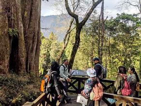 巨木群外看雲海 Sacred Tree Trip Alishan