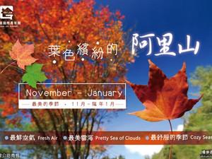 【秋】賞楓到阿里山!