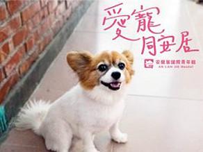 寵物專案 Pet Promotions
