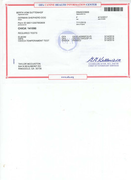 Chic Certification.jpg