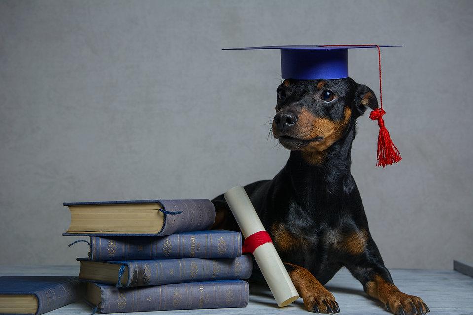 Graduated dog with diploma peeking from