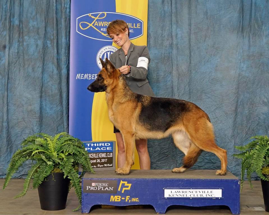 Jules 3rd Place American Bred