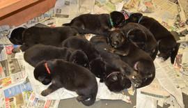 Puppy Group.jpg