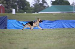 Farrah gaiting in field