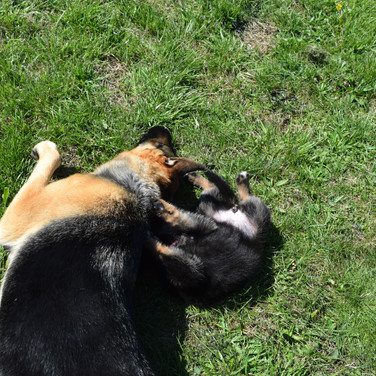 Starburst loves puppies