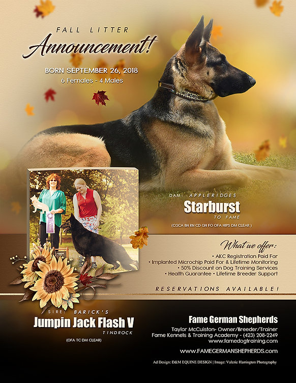 2019 taylor star fall litter ad FINAL fo