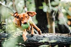 action-adorable-agile-3013467(1).jpg