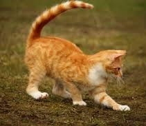 Лев Мадорский. Как мы спасали кошку
