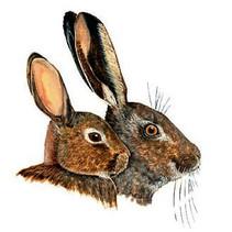 Ефим Златкин. Зайцы – кролики, или Какая  в неволе  любовь ?