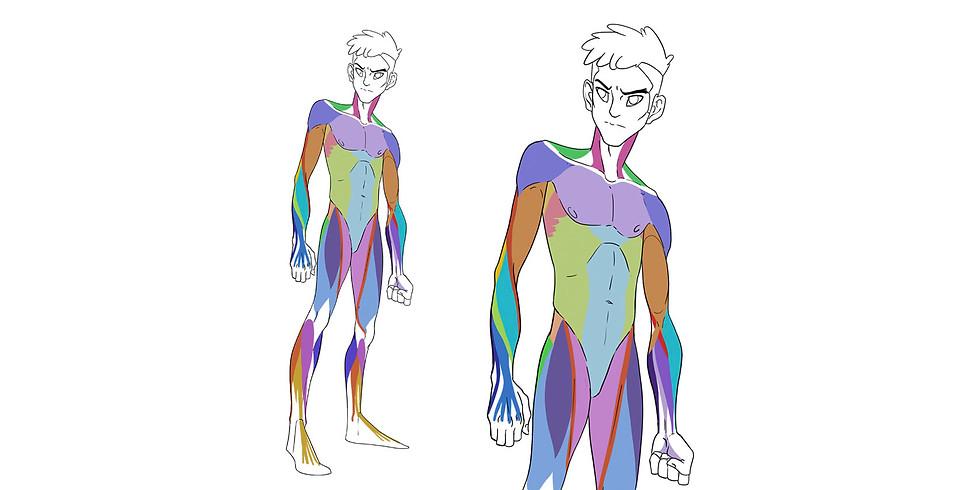 Anatomía para Personajes