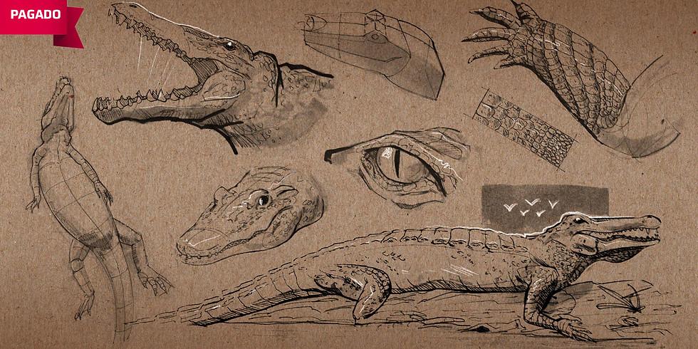 Sketch Dinámico: Animales e Insectos