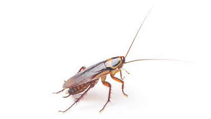 cockroach-on-white-2_560x315_edited_edit
