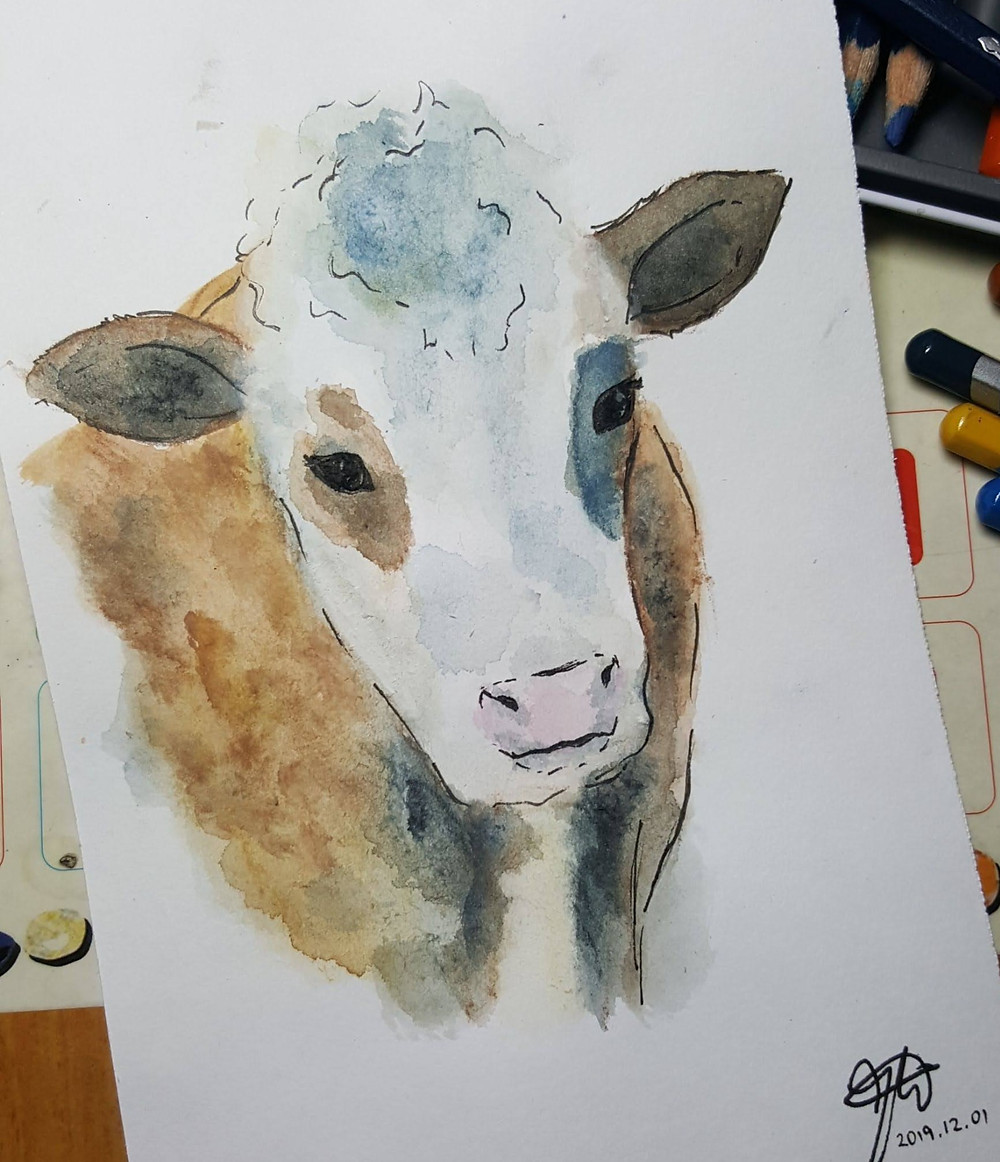 watercolour painting of a cow