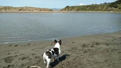 Going for a swim in Bodega Bay, CA.