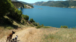 Going for a swim at Lake Sonoma, CA.