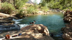 Olive and Makua swimming in Zion Natl. Park, Utah.