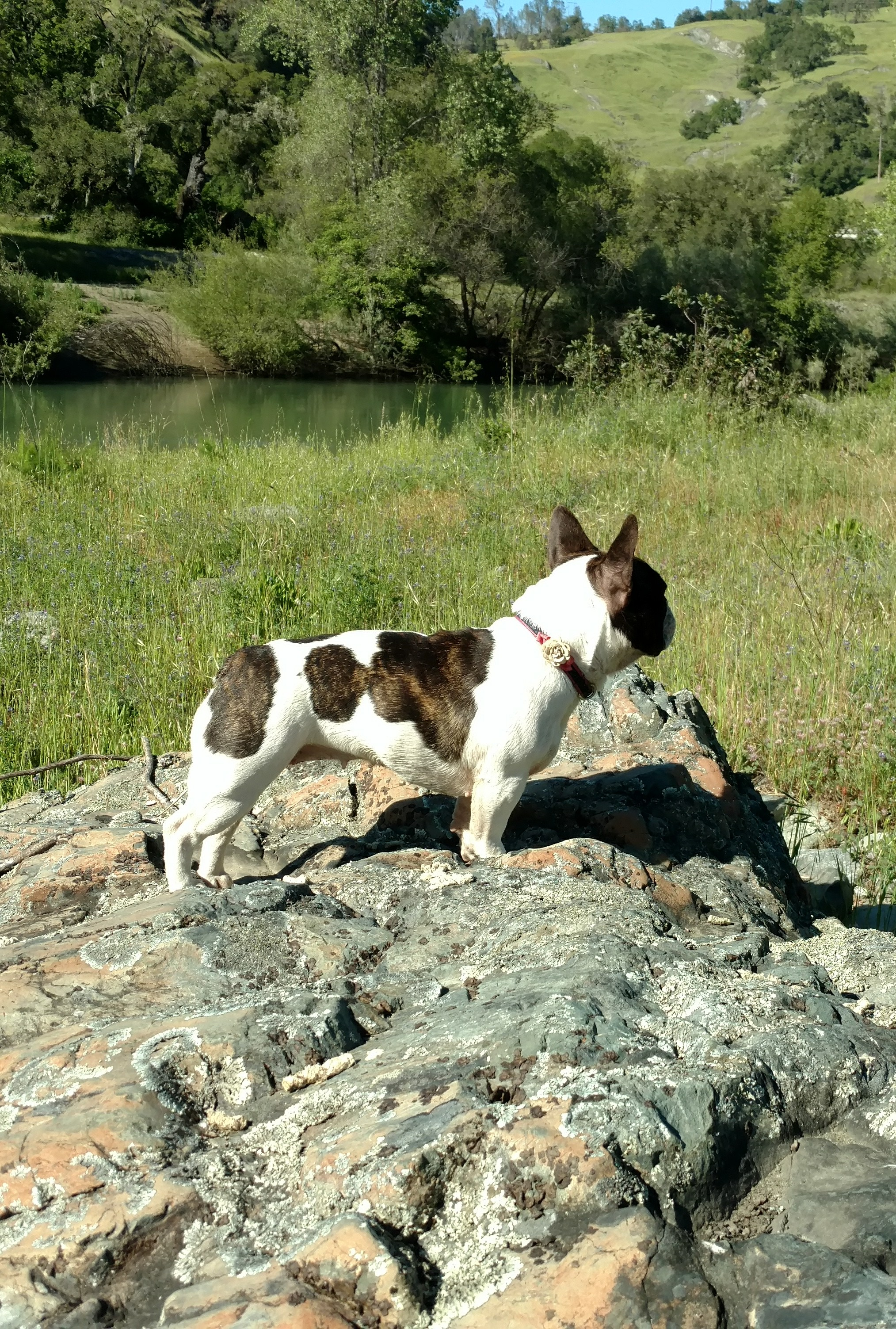 Olive looking good with her family at the Russian River, CA.