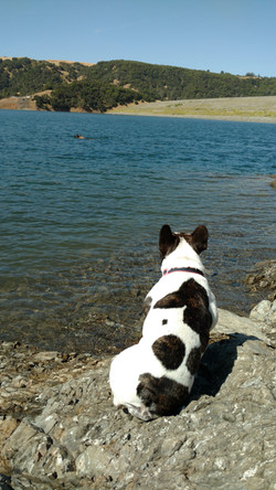 Going for a swim in Lake Sonoma, CA.