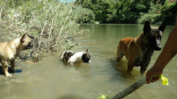 Cooling off in the Russian River, CA.